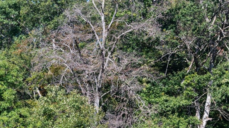 Adapter la forêt au climat, le défi