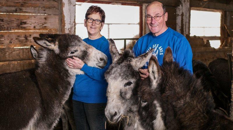 La Chaux-d'Abel: les Geiser se séparent de tous leurs ânes