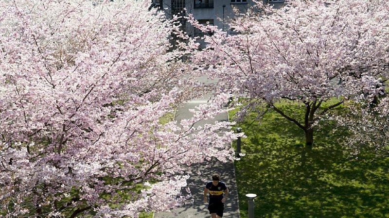 Astronomie: l'équinoxe de printemps aura lieu ce vendredi 20mars