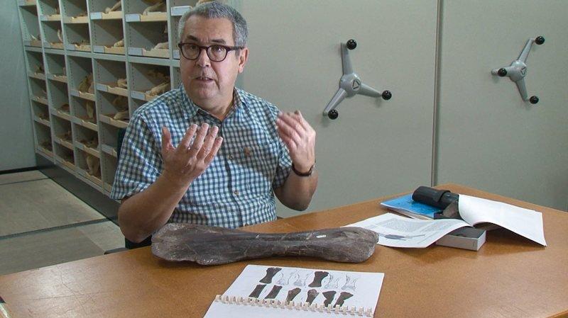 Le docteur Christian Meyer, du Musée d'histoire naturelle de Bâle, et un humerus d'Amanzia greppini.