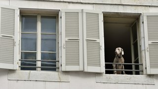 Coronavirus: comment l'Etat prend en charge les animaux des malades?