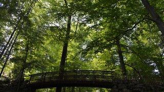 La Chaux-de-Fonds: abattages de saison et nouveau cours de taille fruitière à venir