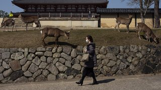 Coronavirus: les villes se vident et les animaux prennent possession des lieux