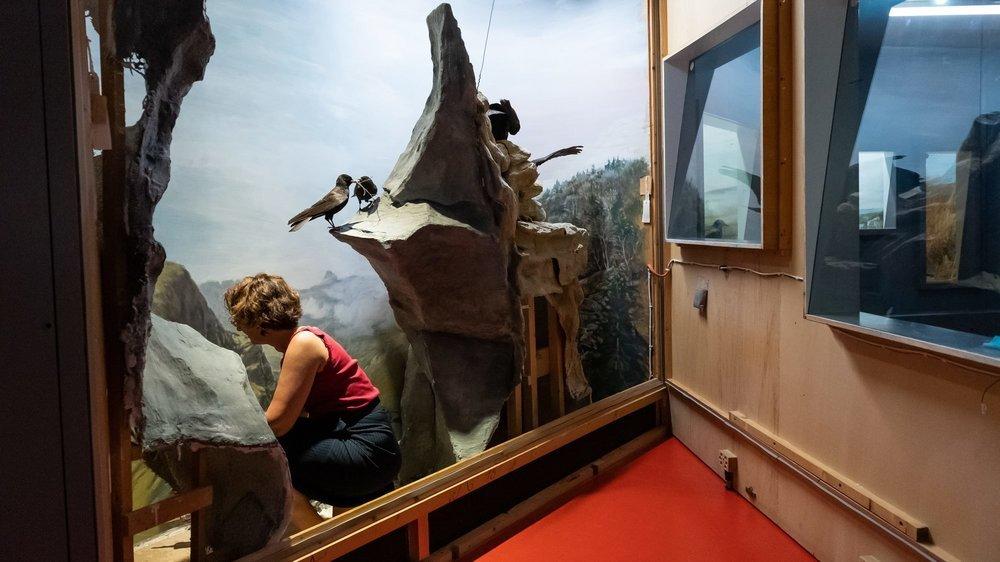 Les fameux dioramas du Muséum d'histoire naturelle de Neuchâtel sont prêts pour la réouverture.