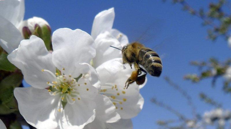 Environnement: il faut éviter d'intoxiquer les abeilles avec des insecticides