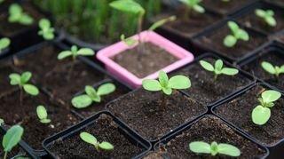 Coronavirus: Neuchâtel prie le Conseil fédéral de libérer les semences et les plantons