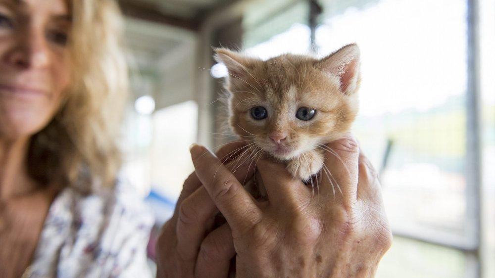 Chantal Yerly, de la SPA neuchâteloise, craint une future vague d'abandons d'animaux de compagnie.