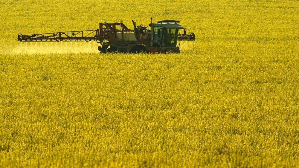 """Dans la lettre de Bayer et Syngenta, les pesticides sont présentés comme des """"désinfectants pour les plantes"""" (image d'illustration)."""