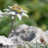 Plantes et armoiries