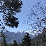 Ces arbres qui poussent et qui grimpent - Journée européenne du patrimoine