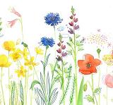 Des fleurs aux mille couleurs