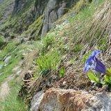 Plantes alpines et déréglement climatique