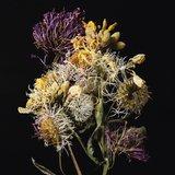 Flora Neocomensis