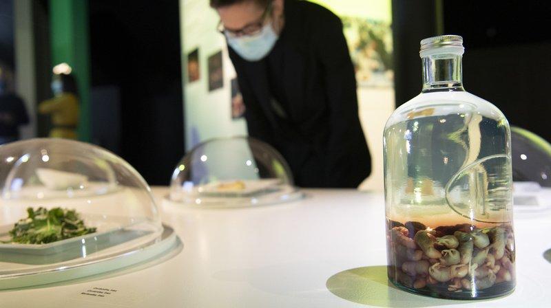 Alimentarium de Vevey: une exposition interactive sur le dégoût