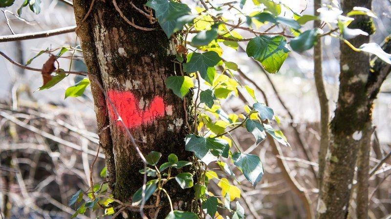 Gros crédits pour la forêt, la nature et les paysages neuchâtelois