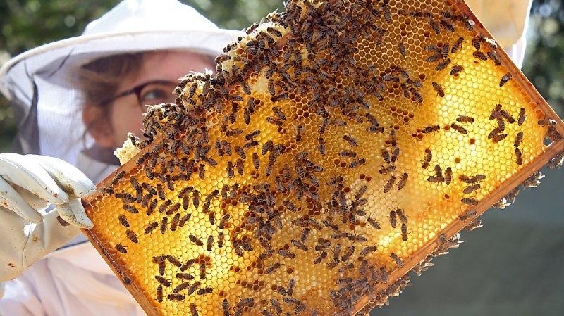 Environ une colonie d'abeilles sur huit n'a pas survécu à l'hiver dernier (archives).
