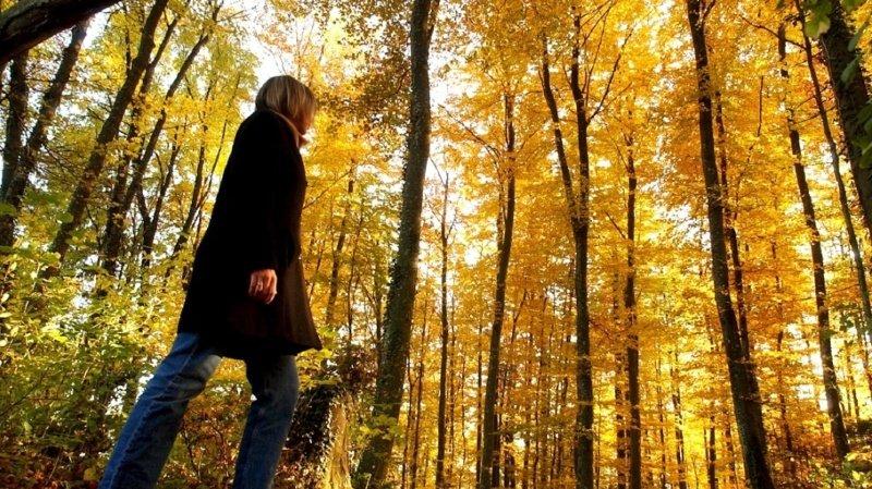 Coronavirus: le confinement a modifié les promenades en forêt des Suisses