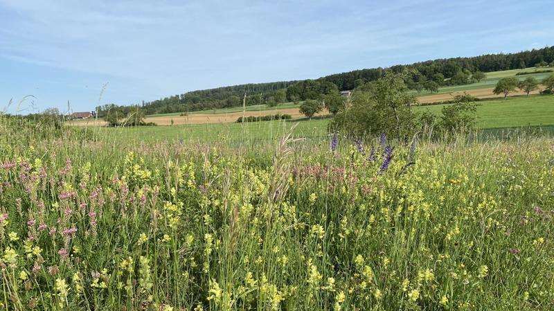 De la vie dans les champs et les vignes