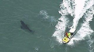 Australie: un surfeur tué par un requin au large d'une plage très fréquentée