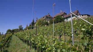 L'appétit immobilier grignote des vignes à Hauterive