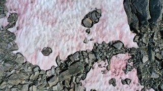 Alpes italiennes: une mystérieuse neige rose recouvre un glacier
