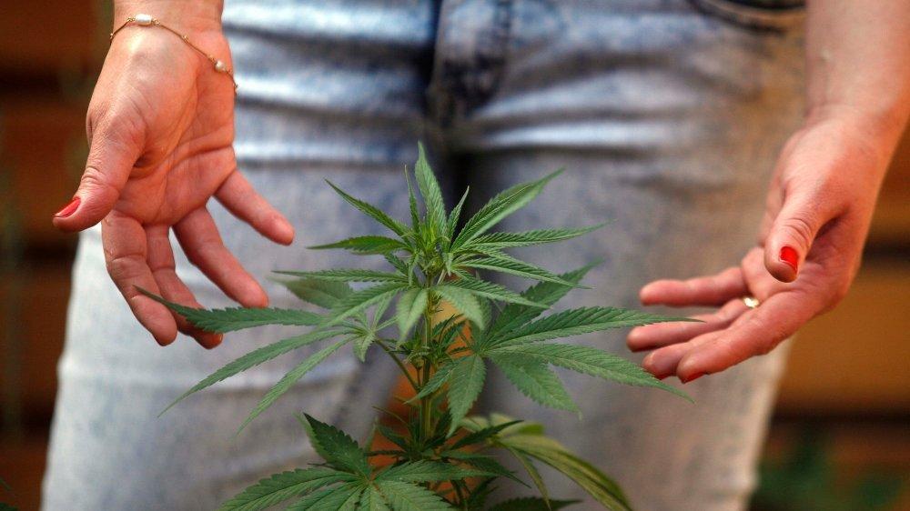 En 2018, la police a trouvé six plantations de chanvre indoor à Saint-Sulpice.
