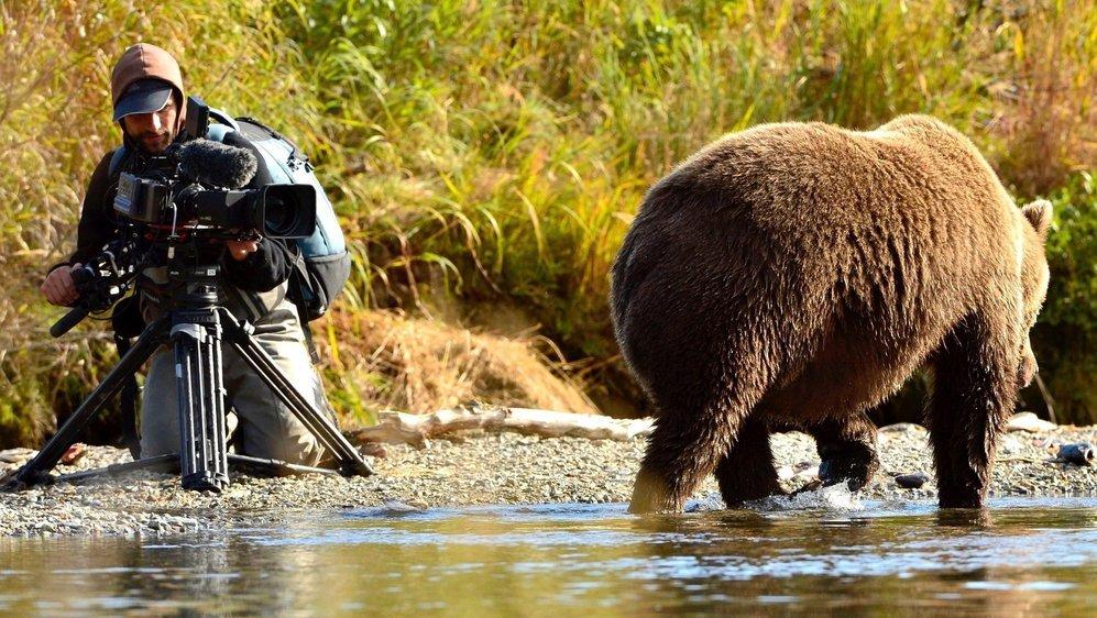 Roman Droux a filmé les ours de près, de très près...