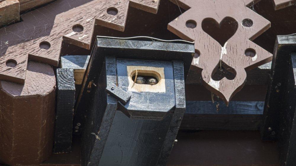 Installer des nichoirs quand les façades ne possèdent plus de cavités: il existe des solutions pour aider les martinets à maintenir leur population.