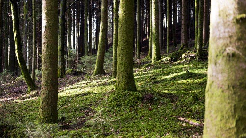 Environnement: les arbres stockent plus de carbone avec le réchauffement climatique