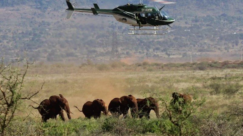 Chasse: éléphants, lions ou léopards, les Suisses abattent 50 animaux protégés par an