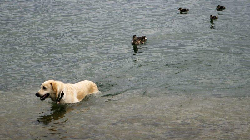 A Neuchâtel, la police enquête après la mort de six chiens
