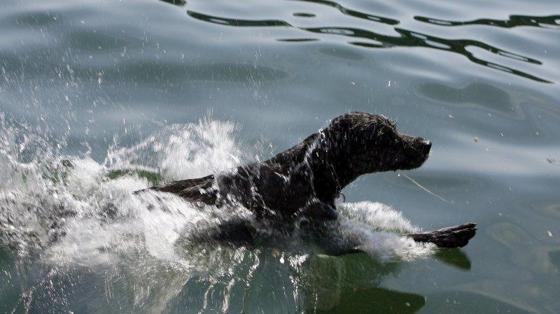 Plusieurs chiens morts par empoisonnement obligent la fermeture des plages de Boudry et Colombier