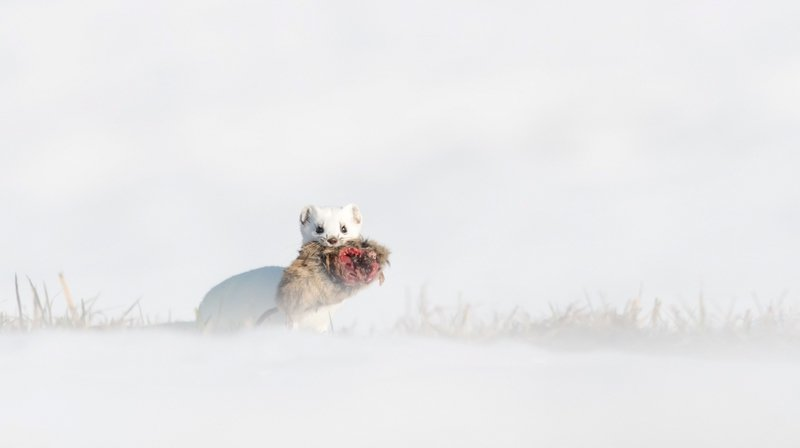Champ-Pittet: capturer la nature en noir et blanc pour le concours photo Roseau d'Or