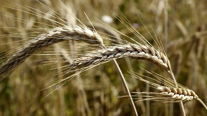 Agriculture et environnement ne font pas toujours bon ménage. (Illustration)