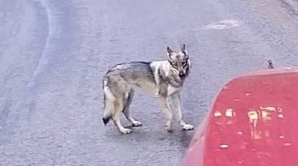 La Brévine a peut-être crié au loup trop vite