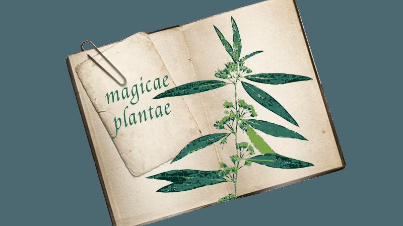 Visite guidée de l'exposition Plantes médicinales