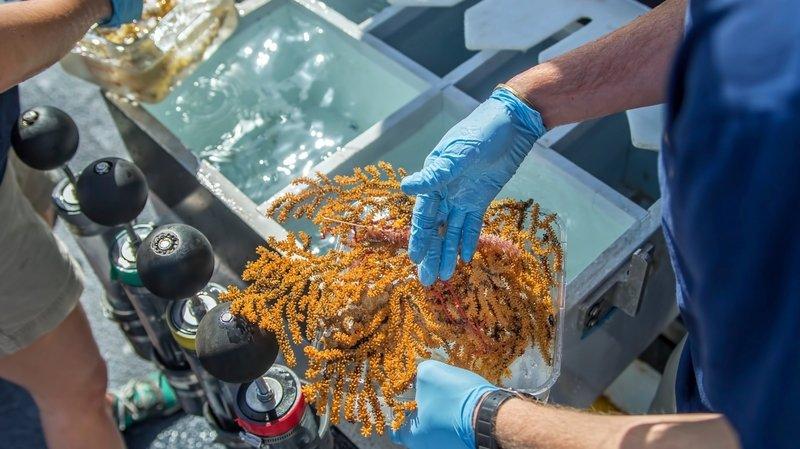 Animaux: trente nouvelles espèces marines ont été découvertes aux Galapagos