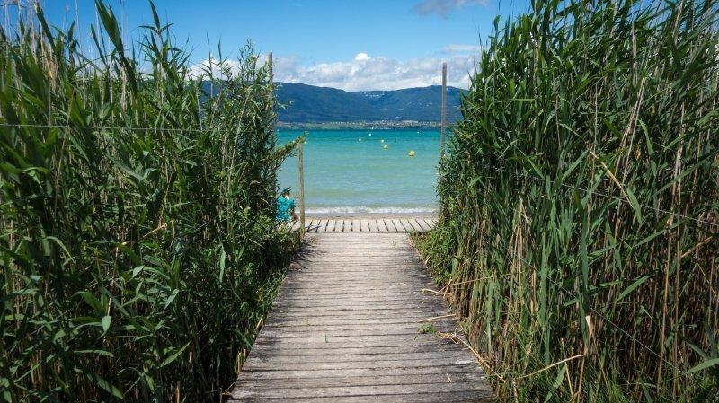 La Grande Cariçaie, le sud sauvage du lac de Neuchâtel