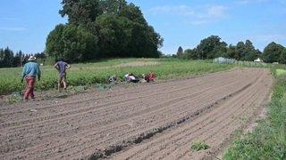 Agriculture: la vente directe convainc toujours plus