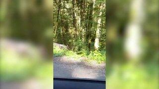 Un chien-loup dans la vallée de La Brévine?