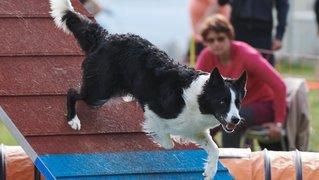 Agility de Couvet: un week-end canin et sportif
