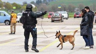 Jura: le chien policier qui avait mordu un enfant à Corgémont a été euthanasié