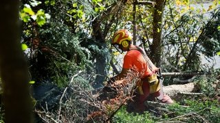 Les feux en forêt interdits dans toute la région