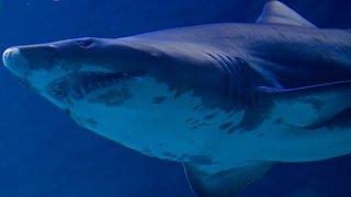 Jeune surfeur tué par un requin en Australie