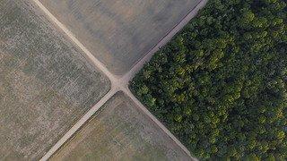 Déforestation record de l'Amazonie au premier semestre
