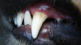 A 6 ans, il sauve sa sœur d'une attaque de chien: 90 points de suture