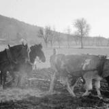Trois regards sur le monde paysan