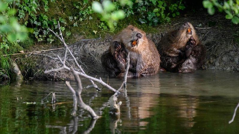 Pour eux, la modification de la loi sur la chasse rate sa cible