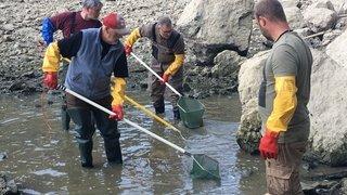 Doubs: plusieurs centaines de poissons sauvés grâce à la pêche électrique