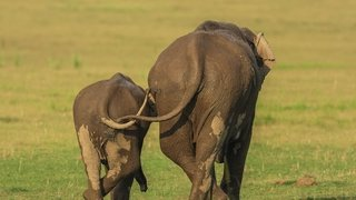 Jagdeep Rajput Elephant